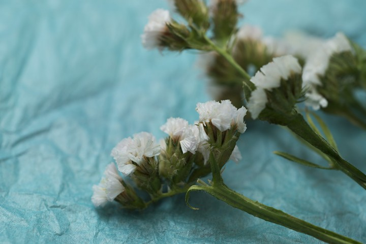 Photo of white flowers with blue background
