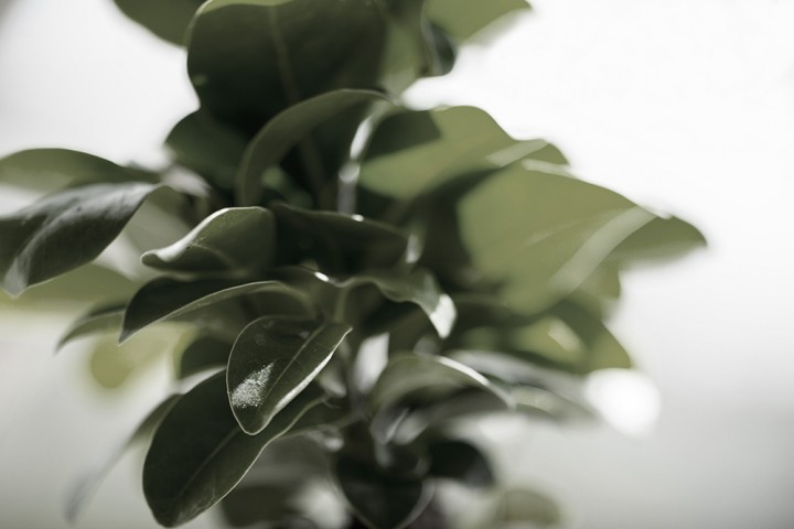 photography of fresh leaves