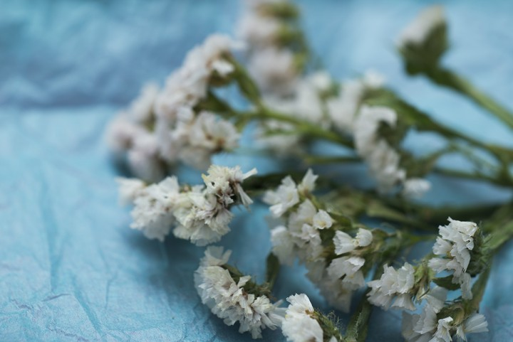 Photography of white flowers on blue background