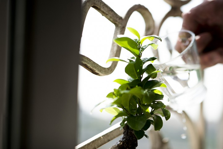 Photo of a plant by the window
