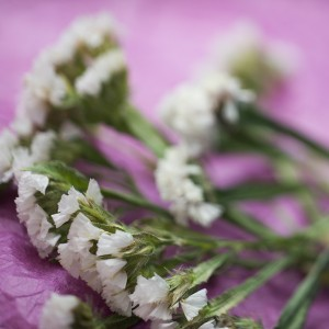Photo of white flowers on purple background